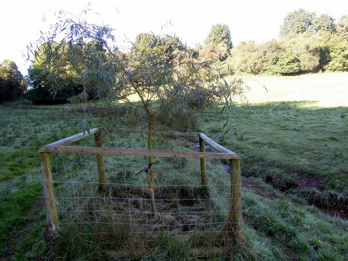 Where some willow trees have been planted