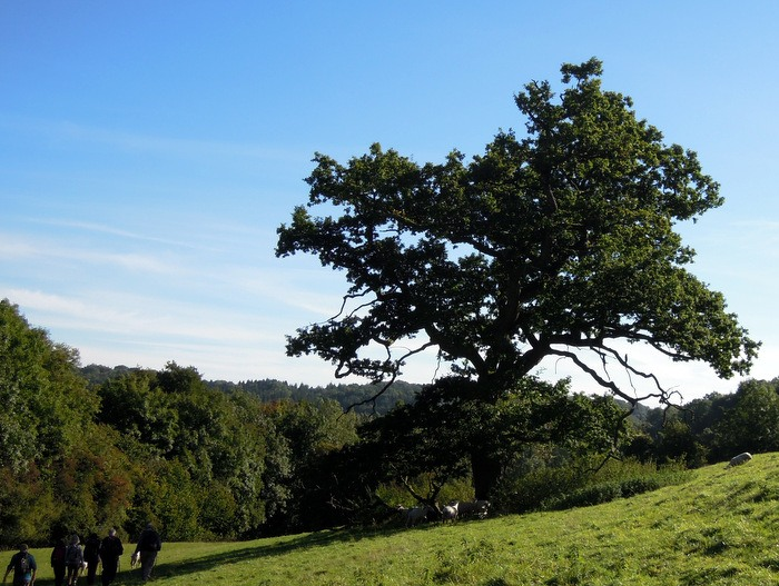 A huge oak tree provides shade for ...