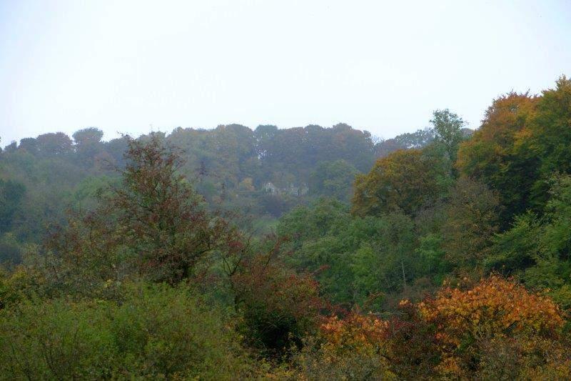 More autumn colours