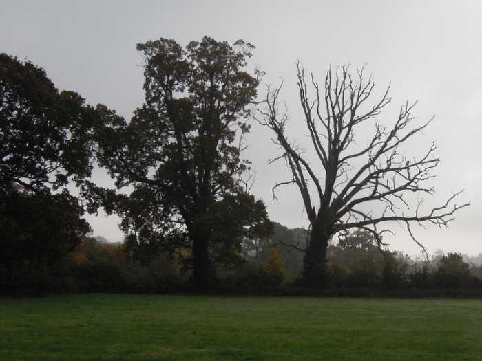 Statuesque trees