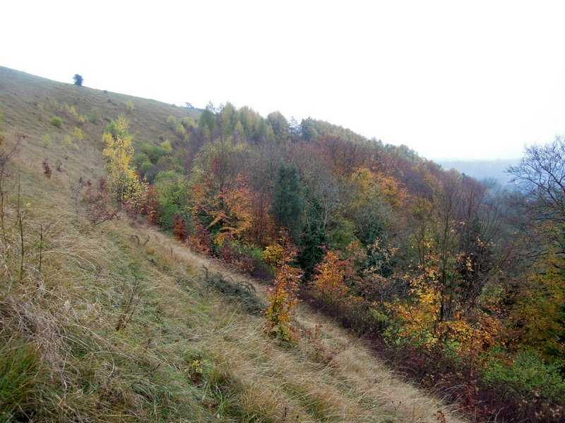 Long-lasting Autumn colours are our reward