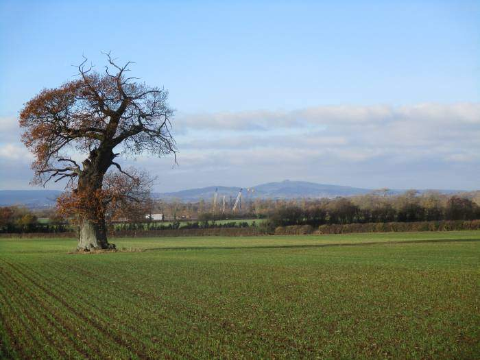 We're now heading back across cultivated fields - May Hill in the distance