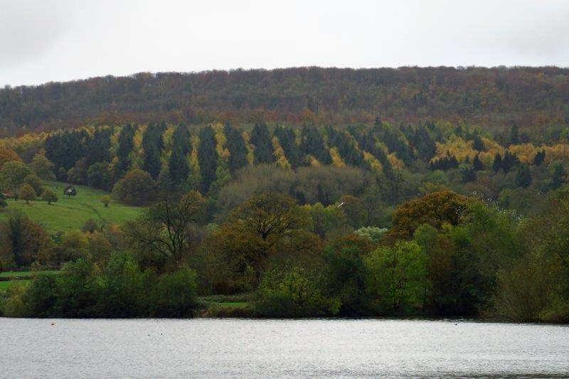 Rows of trees on the hillside