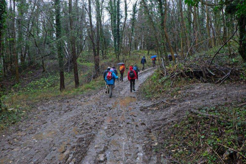 On through the woods and across Cowcombe Hill
