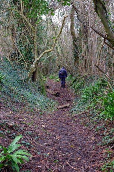 A short cliimb on a wooded path