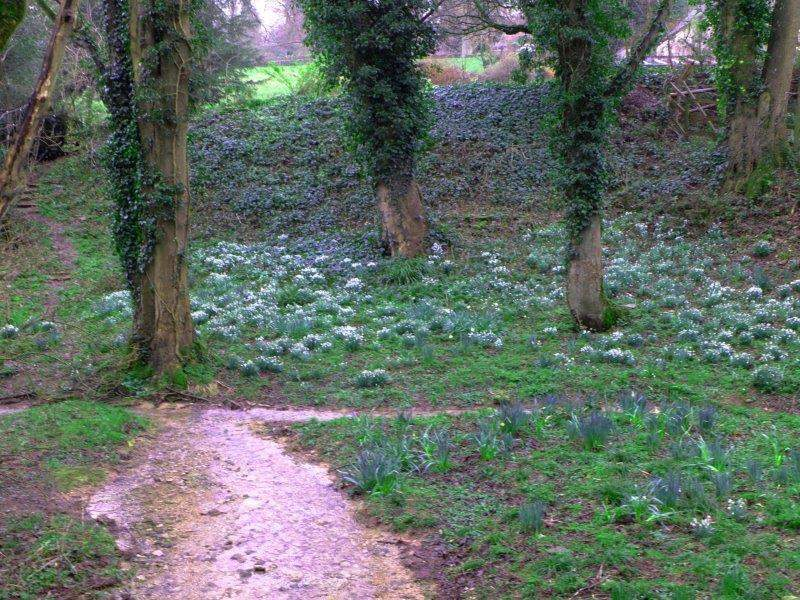 Could those be snowdrops?