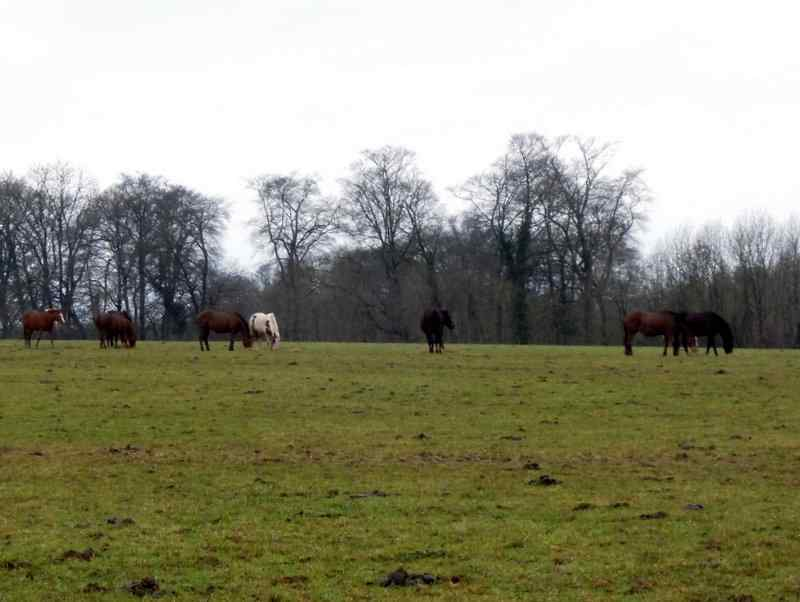 The polo ponies don't seem to mind the winter - it's their holidays!