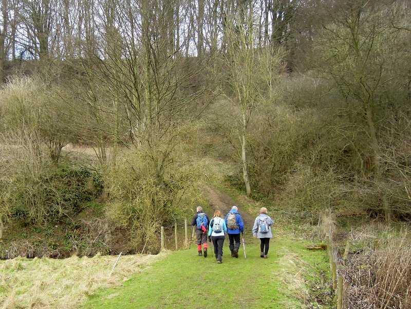 We head through Saltridge Common woods