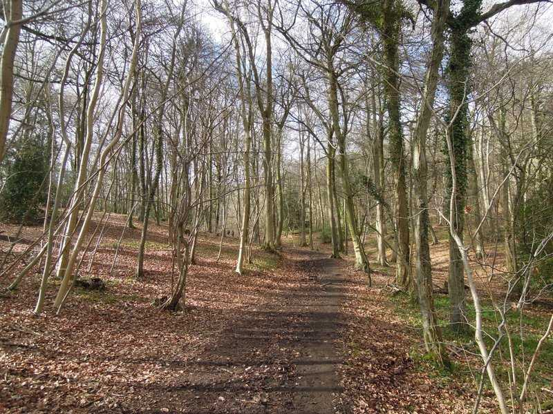 To Buckholt Wood where we turn left back along the Cotswold Way