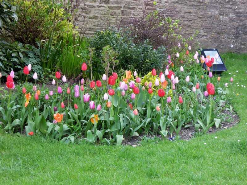 A colourful display in Tetbury churchyard