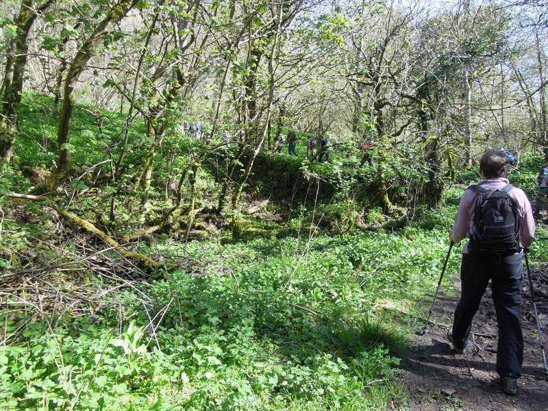 And climb up through Dorvel Wood