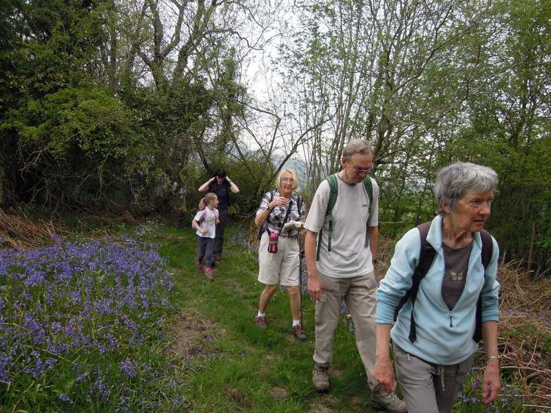 With yet more bluebells