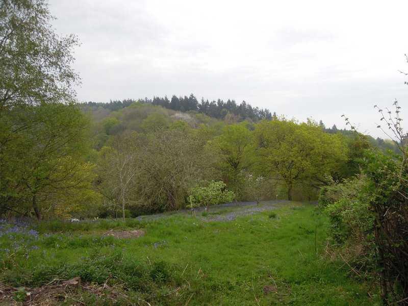 As we descend towards Huntley, yet more bluebells