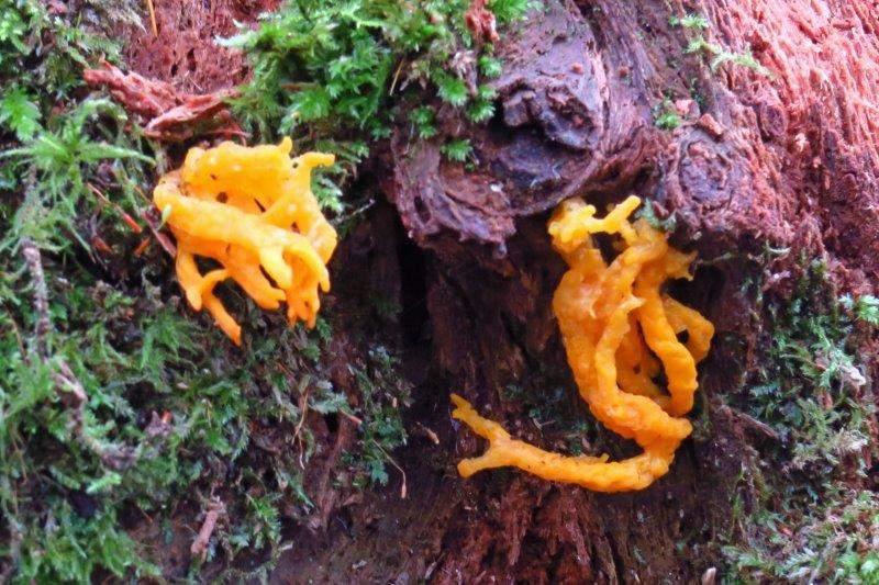 An unusual fungus