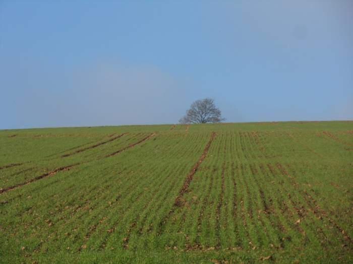 Blue sky, green field