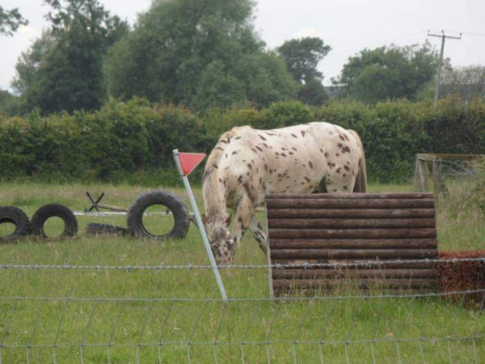 Unusual markings on this horse - we discuss what breed it is, to no conclusion.