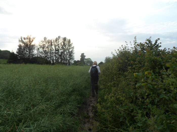 We head back through the wet oil seed rape, hoping it will wash some of the mud off our trousers (it doesn't!).