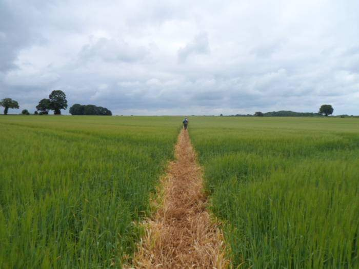 With a good path that stretches forever