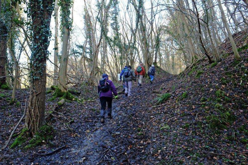 Before heading up the side of Siccaridge Wood