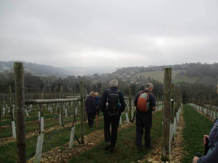 And descend through the vineyard