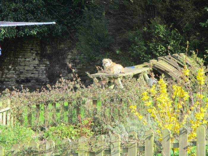Watched by this Sapperton resident enjoying the sun