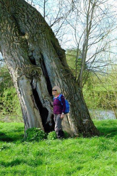 Ann poses in a hollow tree