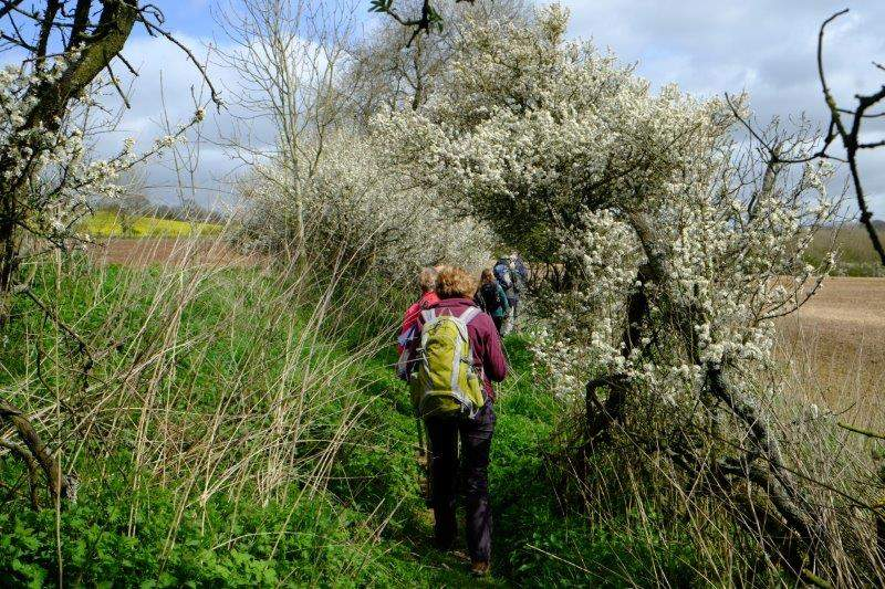 As we walk through an avenue of blackthorn