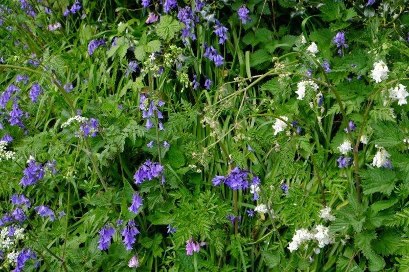 More wayside flowers