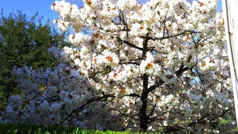 Nice bit of blossom