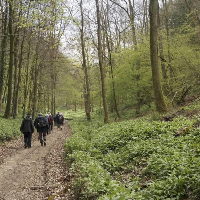 Down through Workman's Wood on Colin's walk