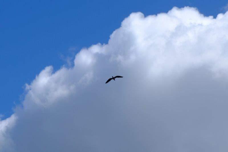 Spotting a heron flying overhead