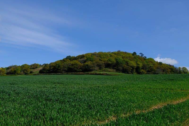 Looking across to Sidbury Castle