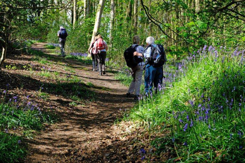 into bluebell woods