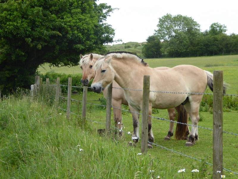 Past these friendly horses