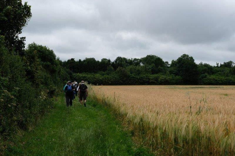 Round a field of barley