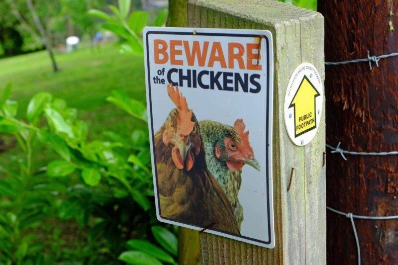 Facing countless dangers