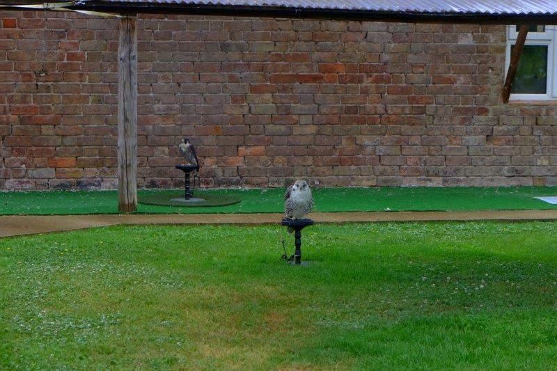 Some birds of prey prove a distraction