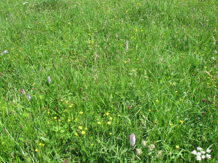 Meadows of wild flowers