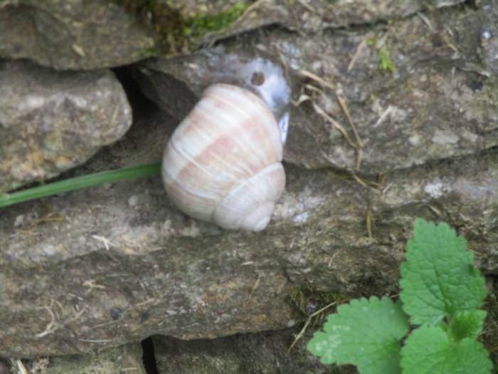 Jean spots a Roman snail on the wall