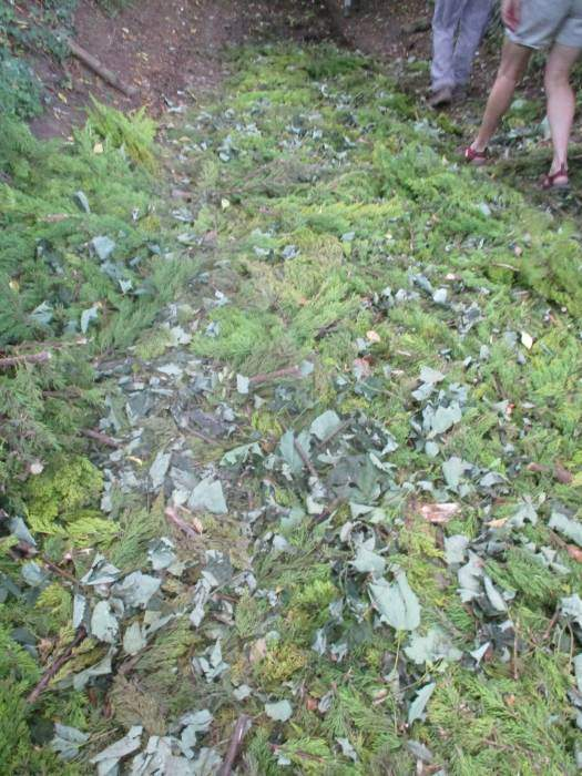 Hedge cuttings making it soft under foot