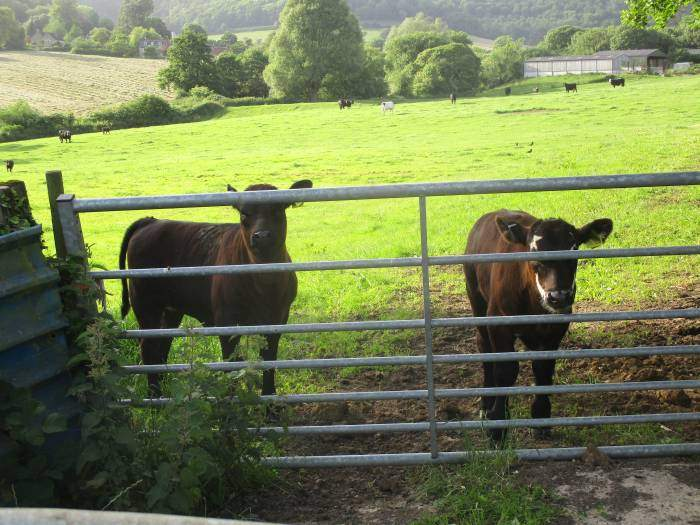 Another curious pair peering through the gate