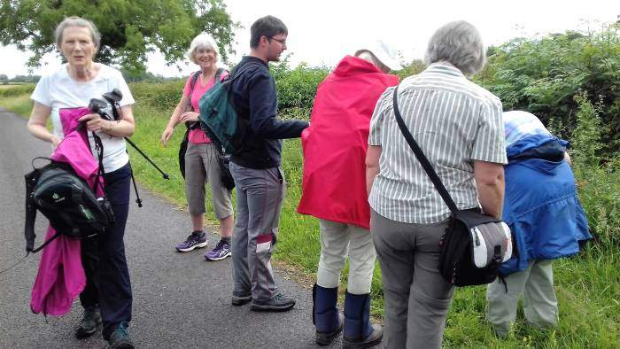 Adam from Basingstoke identifying the wild flowers.  He was very knowledgeable.