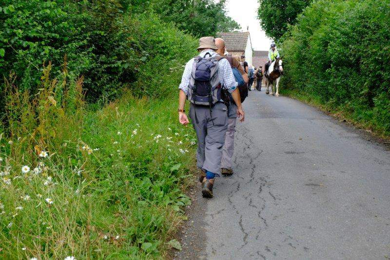 A short stretch of road and a horse