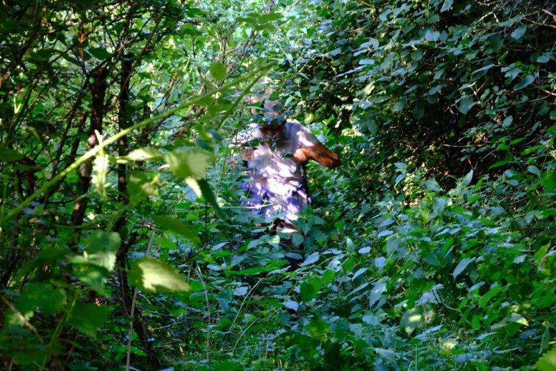 And along the top where the undergrowth gets quite thick