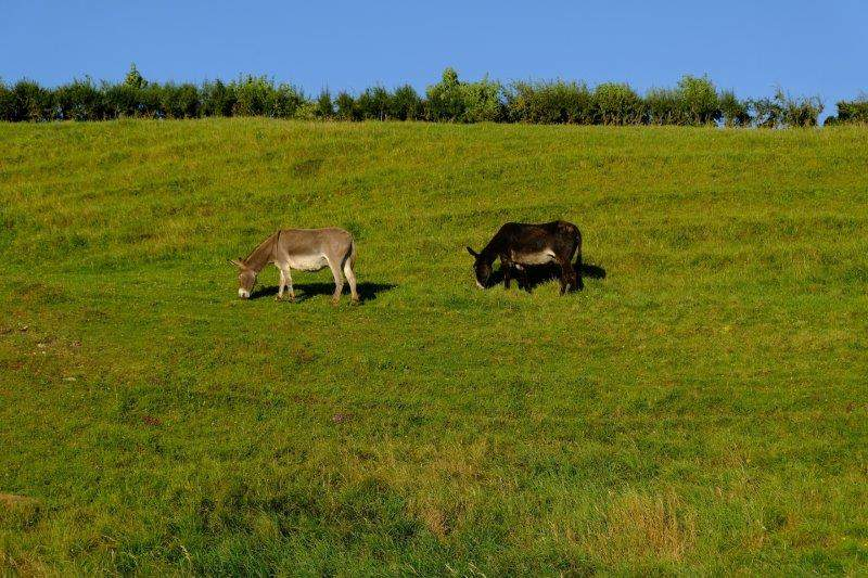 And then heading down into Westley Farm, donkeys on one side