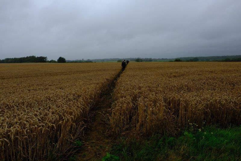 More wheat fields to cross