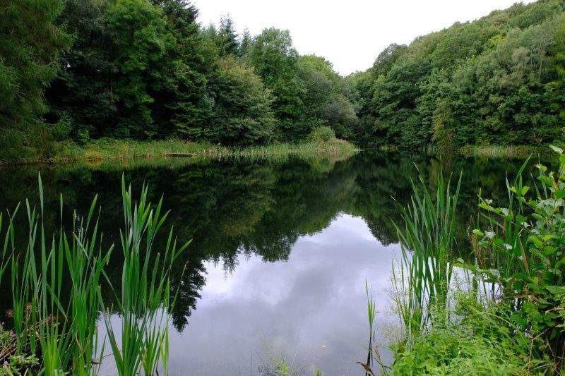 Past a secluded pond