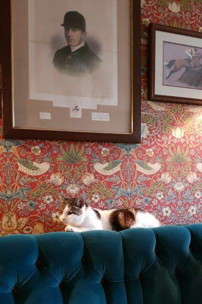 Where we are joined by the eponymous Cat (but no Custard Pot)