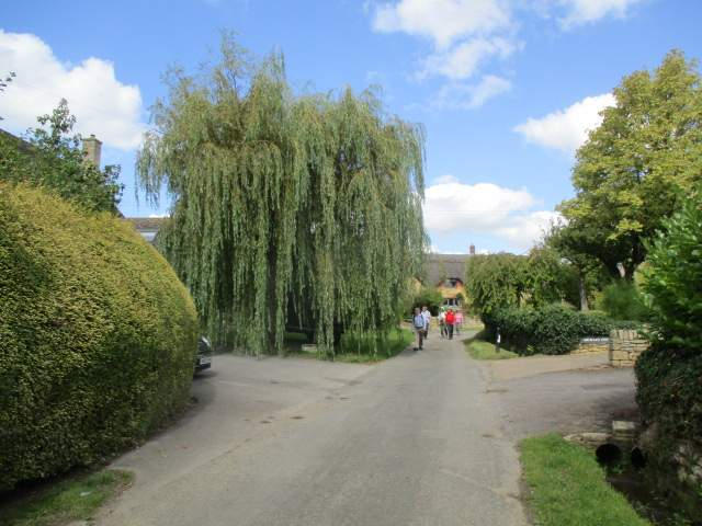 There's a car parked under this weeping willow tree