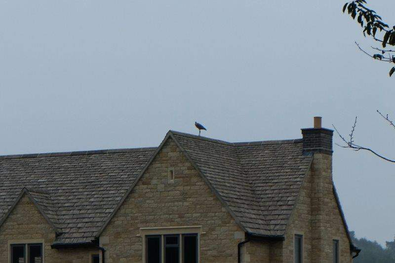 A heron perched on the roof of this house